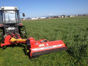 緑肥の刈取り