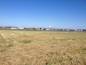 緑肥の刈取り後