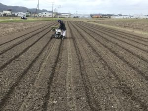 2020だだちゃ豆の植え付け開始